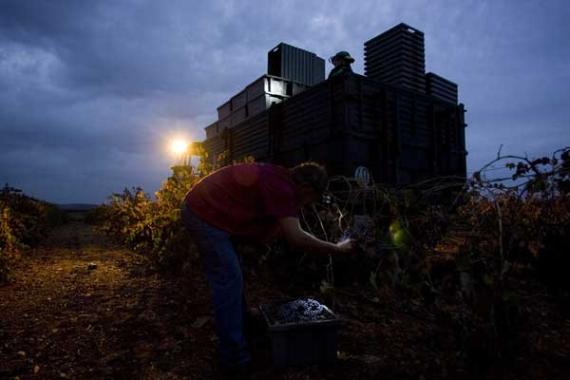 Vendimia de noche en la bodega Pago de las Encomiendas