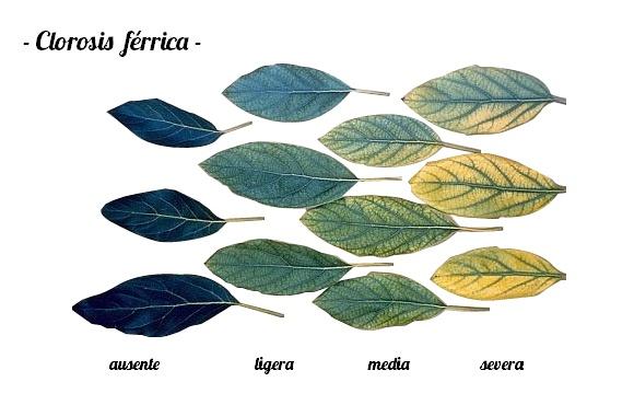 Tratamiento de la clorosis férrica - Agroterra Blog