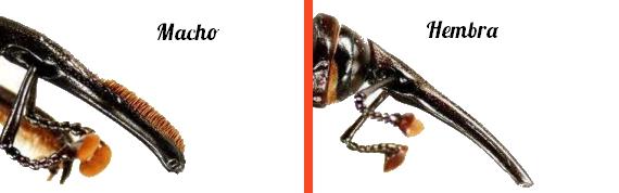 Detalle de insecto macho y hembra