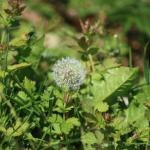 Herbicidas, clasificación y uso