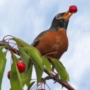 Ahuyentador Industrial de Aves BIRDGARD