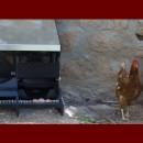 Ponedero Nest Farms. Sistema modular