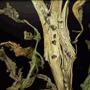 Podredumbre blanca en hortícolas