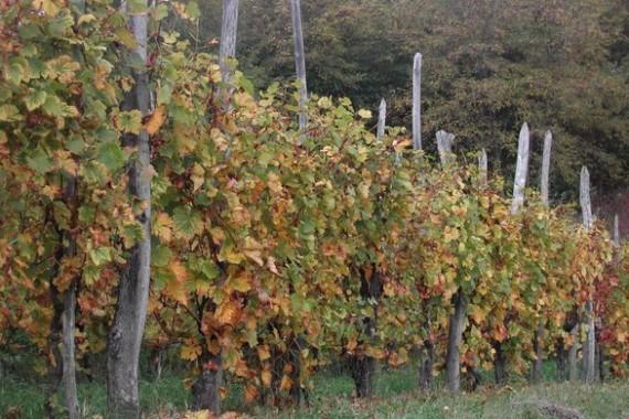 vineyard-1402339