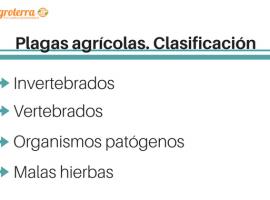 Plagas agrícolas. Clasificación