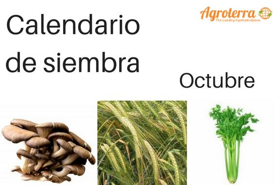 Calendario de siembra Octubre