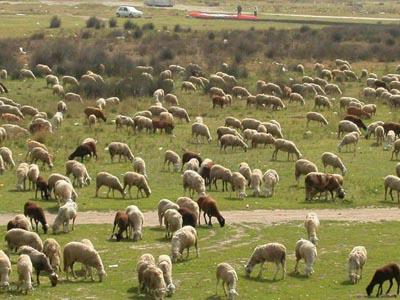 La ganadería trashumante: un ejemplo de respeto al medio ambiente en peligro de extinción