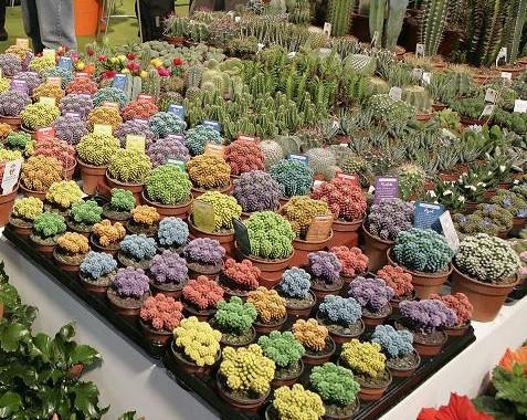 el sector de horticultura ornamental de catalu a inicia On horticultura ornamental