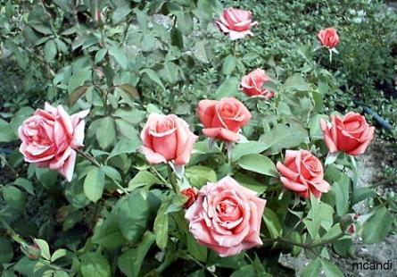 Las plantas ornamentales agroterra blog for Viveros ornamentales