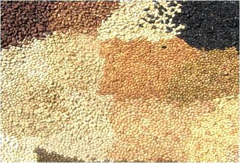 Resultado de imagen para sesamo y ajonjoli