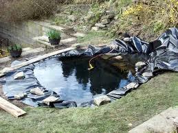 Instalar un peque o estanque en el jard n agroterra blog for Como construir un estanque en el jardin