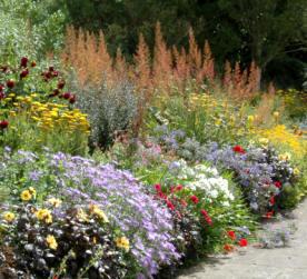 Plantas herb ceas para crear borduras agroterra blog for Herbaceous border design examples